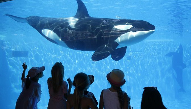 Orca at SeaWorld (image credit: KTLA)
